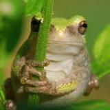 教科書。井の中の蛙。